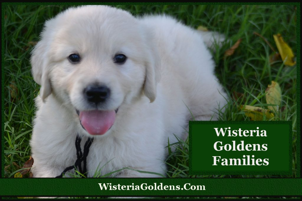 wisteria Goldens families