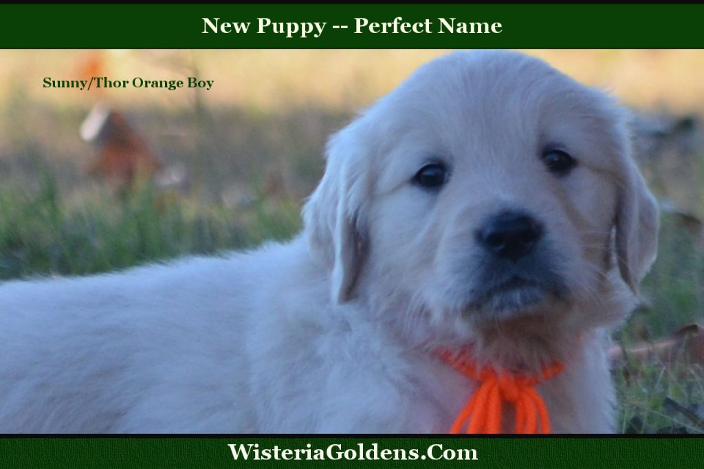 new puppy perfect name