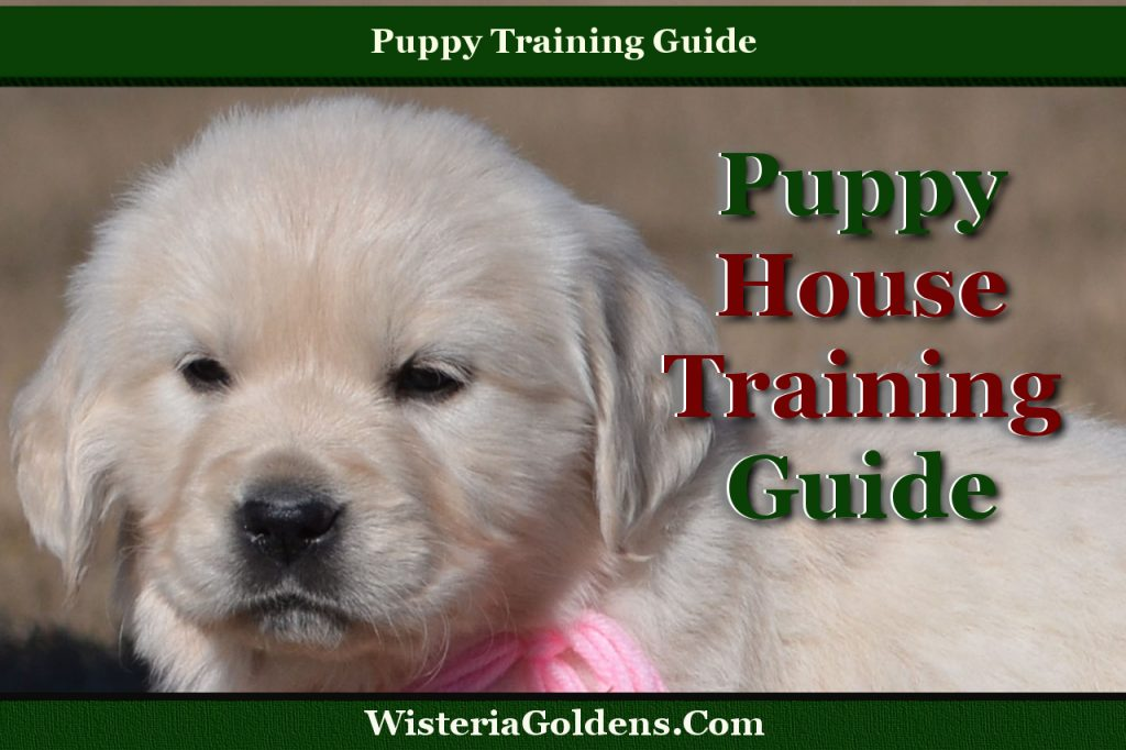 Puppy House Training Guide