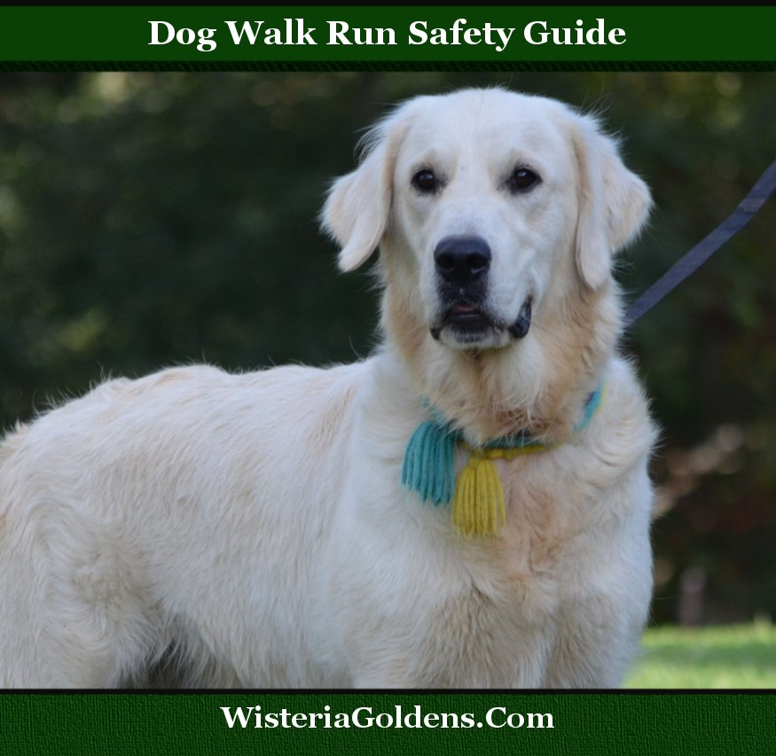 dog walk run safety guide - Sailor