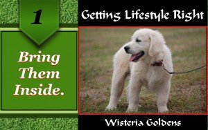 Bring them inside is a checklist guide about how to prepare your home for a safe and happy  place for your dog