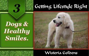 This training guide provides information about a dog's oral dental care. From puppy to adult.