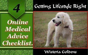 Online Medical for Dogs Checklist – Best Use of Online Information