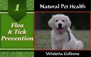 Natural Flea and Tick Prevention Certified Pure Therapeutic Grade Essential Oil RECIPE for mist and cotton bandanna collar