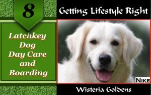 Latchkey Dog Day Care and Boarding