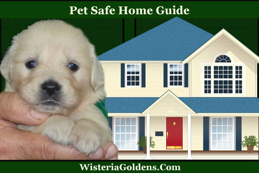 Dangers for Dogs: Pet Safe Home Guide discusses several safely issues to consider when you are making your home pet safe.
