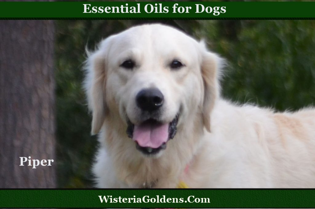 Essential Oil Precautions for Dog Owners