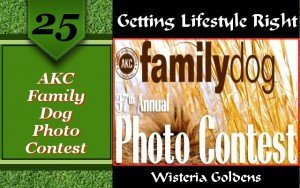 Family Dog Photo Contest. AKC 37th annual How many photos do you have of the family dog?