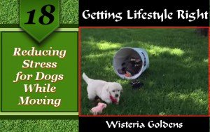 Reducing Stress for Dogs While Moving