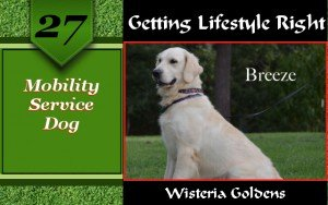 Mobility Service Dog allows people who need help with balance in daily activities more freedom and independence.