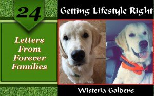 Letters From Forever Families testimonials from Wisteria Goldens English Cream Golden Retriever puppy owners