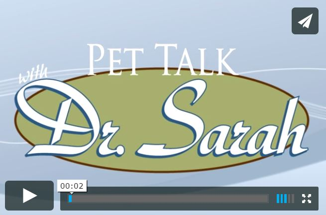 Tips for Holiday Travel Pet Talk with Dr Sarah