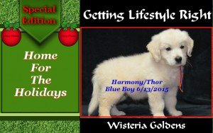 Home for the Holidays Tips for bringing your puppy home to assist in transition