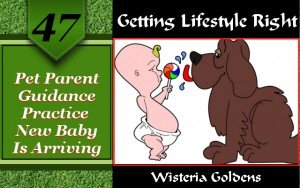 Pet Parent Practice new baby is arriving a dog training by wisteria goldens
