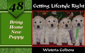 Bringing Home New Puppy The transition of bringing home a new puppy is an important experience for everyone. This includes your new puppy, members of your family, other pets in your home, and visitors you have in your home during the transition time.