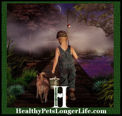 HealthyPetsLongerLife.Com We love to provide information to our families to support and increase optimal health of their puppies, as well as into adulthood, increasing the longevity of their life! The brand you feed is the most important decision you can make as a pet parent. Visit our resource page: (http://wisteriagoldens.com/lifes-abundance/) and let me know if you have any questions.