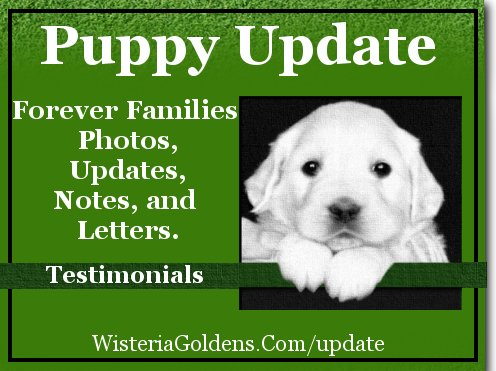 puppy update archives