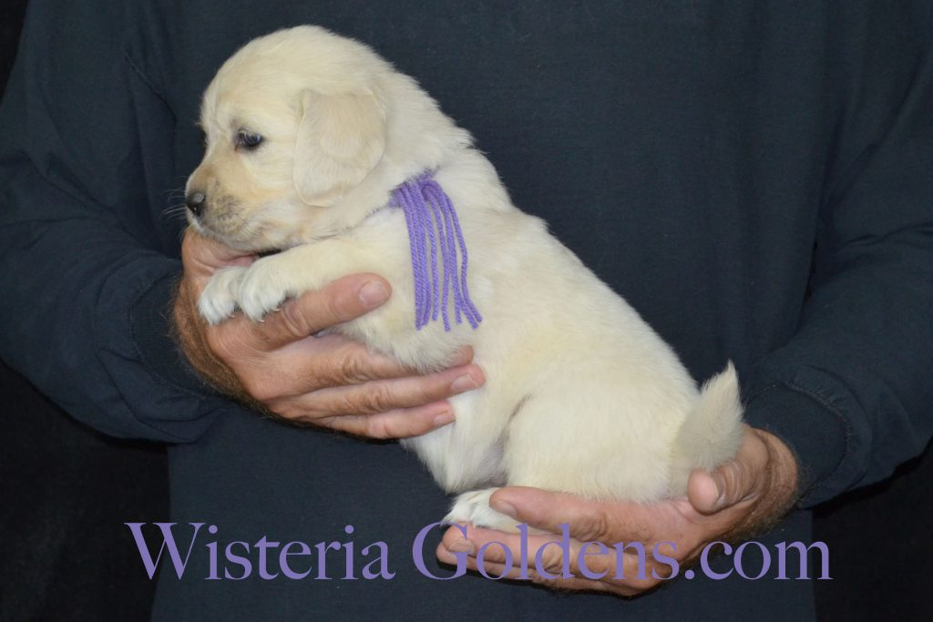 Piper Lt Purple Girl 4 Wks_0627
