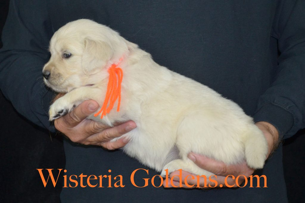 Piper Orange Girl 4 Wks_0617