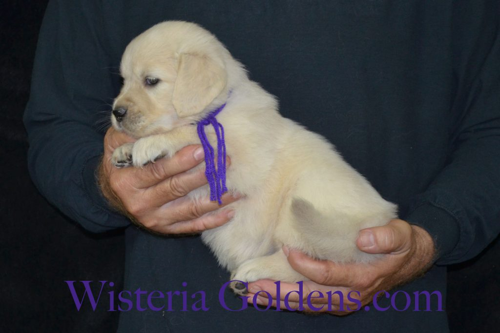 Piper Purple Girl 5 Wks_0719