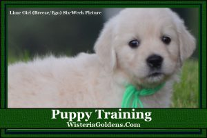 Puppy Training Guides Wisteria Goldens Blog