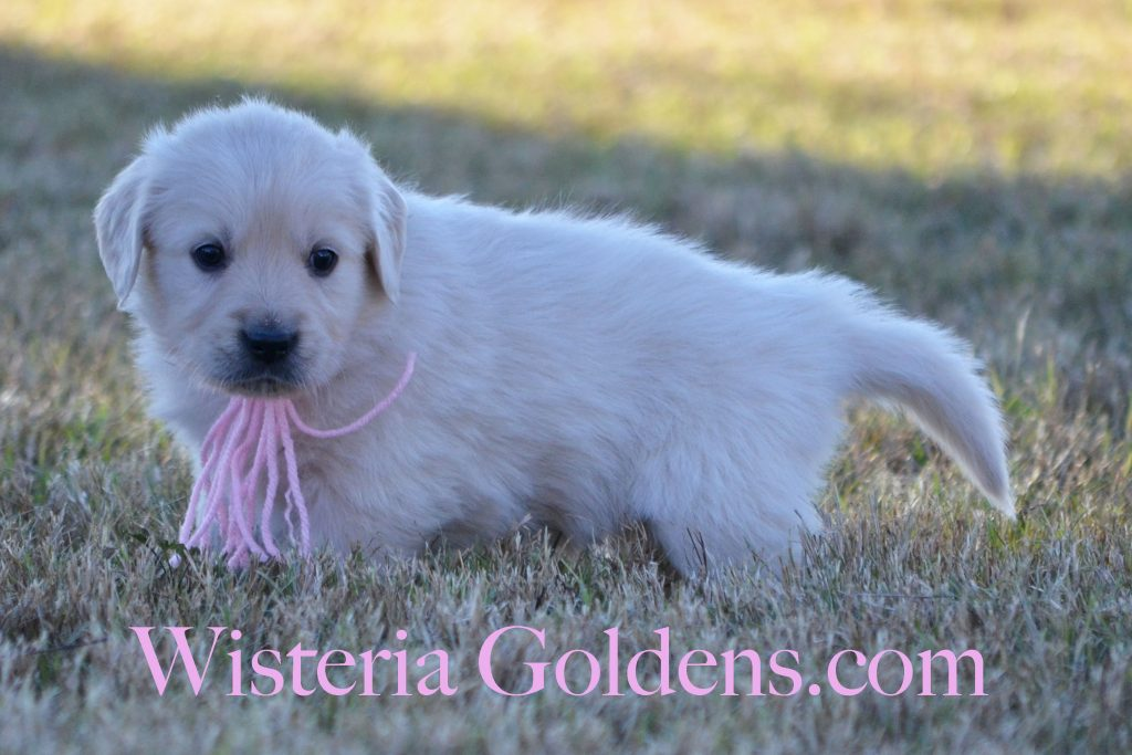sailor-pink-girl-6-weeks_0978