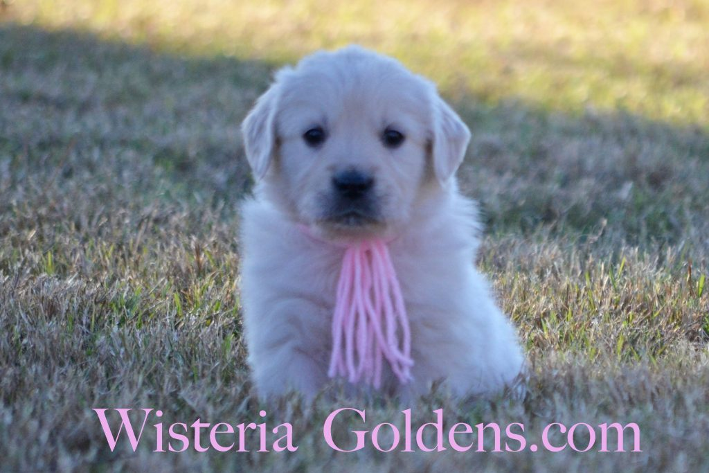 sailor-pink-girl-6-wks_0971