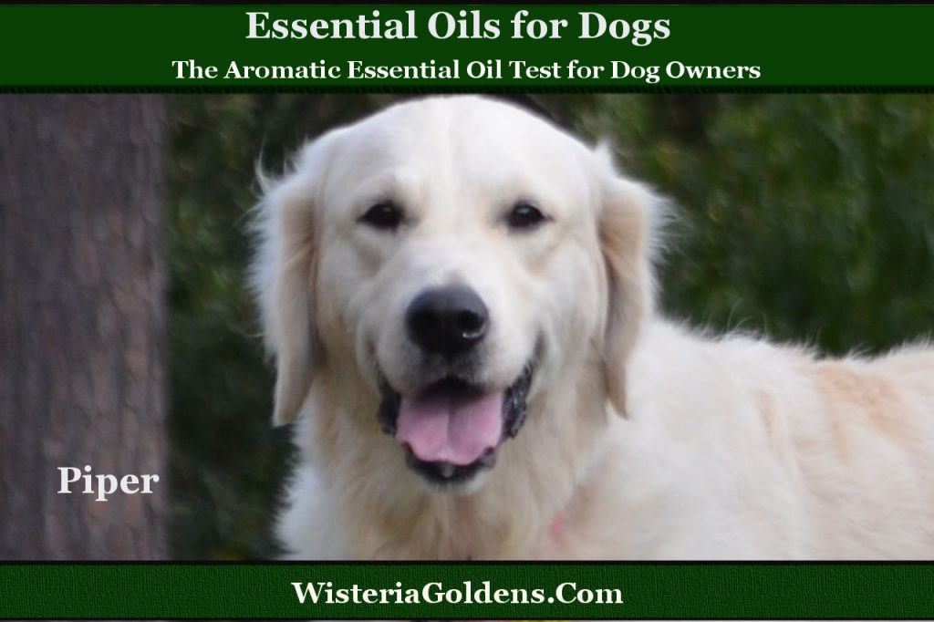 The Aromatic Essential Oil Test for Dog Owners
