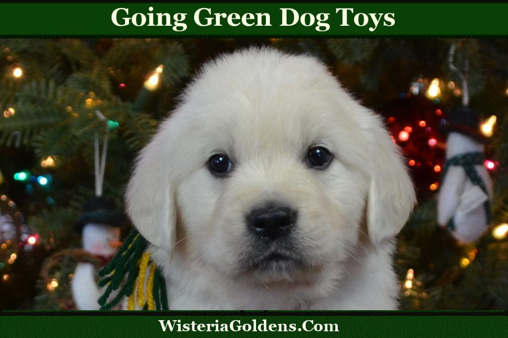 going green dog toys