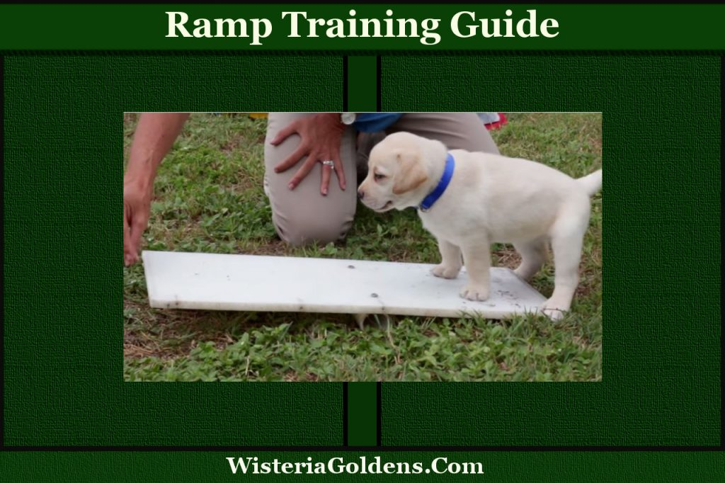 Ramp Training Guide Socialization Exercise Step by Step