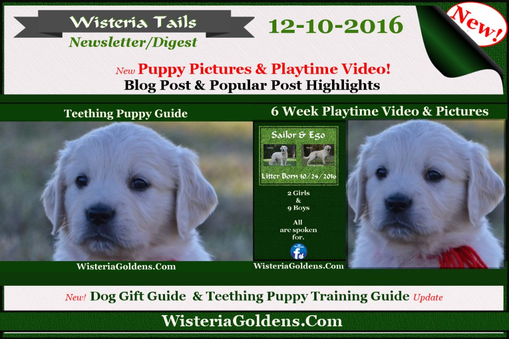Wisteria Tails Highlights 12-10-2016