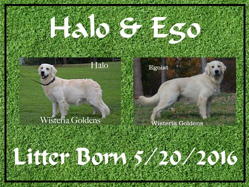 Halo Litter born 05-20-2016