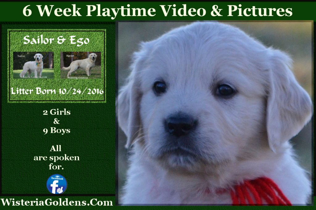 Sailor Litter Six Week pictures and playtime video