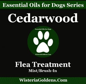essential oil dogs guide cedarwood
