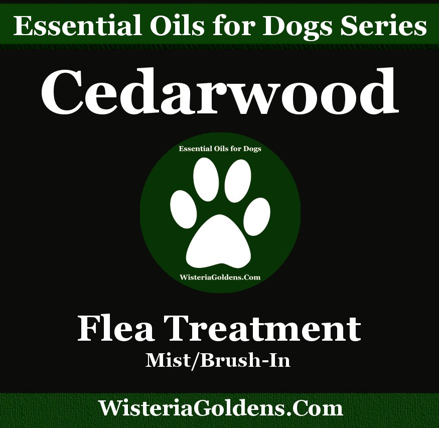 cedarwood essential oil. essential oils support dogs naturally series. Flea Treatment recips guide cedarwood