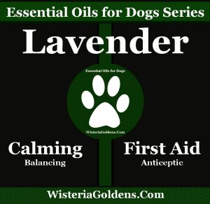 Lavender Oil Supports Dogs