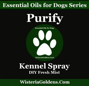 essential oils support dogs naturally purify kennel spray DIY Kennel Mist recipe