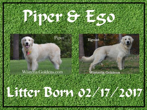 Piper Litter Born 02-17-2017