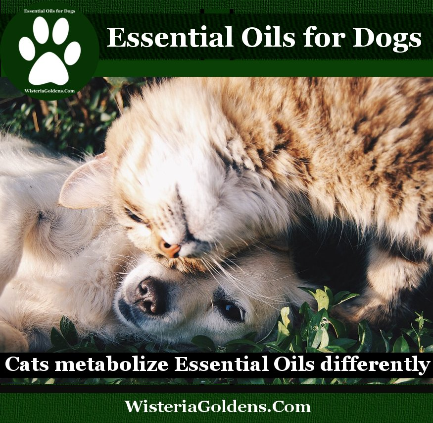 Cats metabolize Essential Oils differently