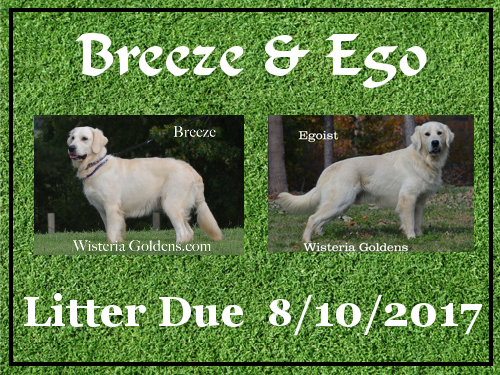 wisteria tails highlights 07-15-2017 Breeze Ego Litter Due 08-10-2017