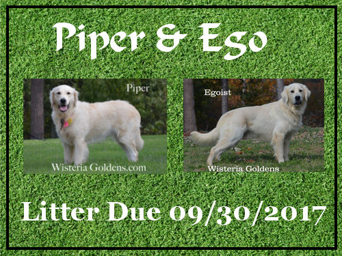 Available Puppies Piper/Ego Litter Due September 30, 2017