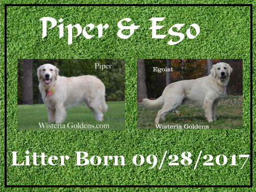 Piper Litter Born 09-28-2017