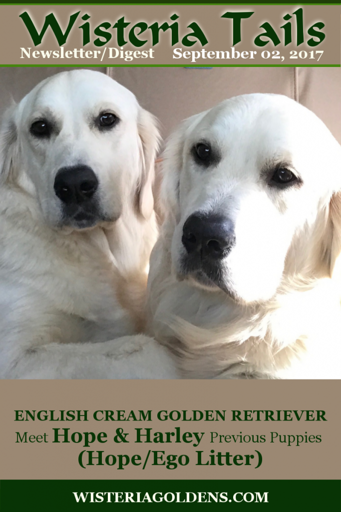 Wisteria Tails Highlights 09-02-2017 Hope and Harley Previous Litters These are Hope/Ego's puppies. The family got a sister and brother. Forever Wisteria Goldens Family Letters