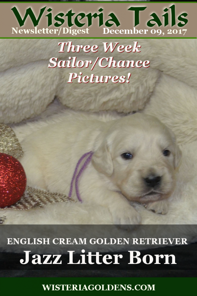 Wisteria Tails Highlights 12-09-2017 Wisteria Goldens English Cream Golden Retriever Newsletter Online Version