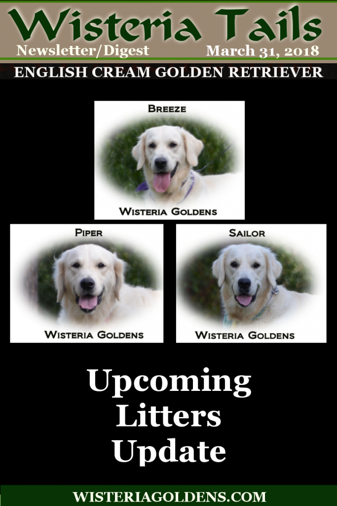 wisteria tails highlights 03-31-2018 Upcoming Litters Breeze, Piper, and Sailor Wisteria Goldens English Cream Golden Retriever puppies for sale
