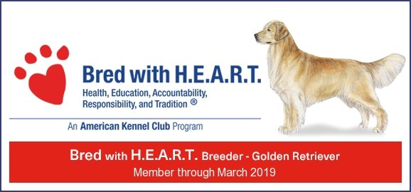 Bred With HEART Wisteria Goldens is a Member of Dog Breeders Bred With HEART AKC Bred with H.E.A.R.T. Program Wisteria Goldens have consistently been committed to being in good standing with the AKC and other authorities in all areas of our business. But, our primary dedication is to raise happy and healthy English Golden Retrievers. We love our families! We love our dogs! We love our remarkable team! Bred With HEART #englishgoldenRetriever #puppiesforsale #BredwithHEART #AKCprograms
