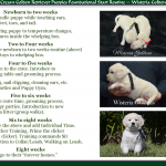 Featured this Month Available Puppies English Cream Golden Retriever Puppies Foundational Start Routine at Wisteria Goldens
