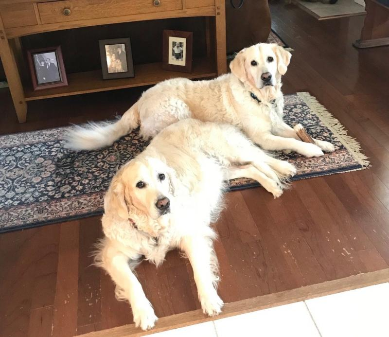 Happy Families, Gracie and Beau (Libby/Aspen) puppy updates