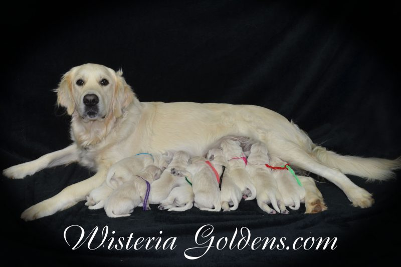 Newborn Pictures The Girls The Boys The Group Keeva with her Puppies