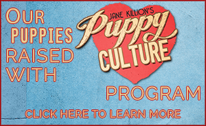 Our Puppies are Raised with Puppy Culture Click Here to Learn More